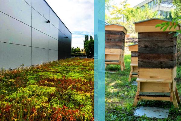 ktr-toit-vegetal-et-ruche